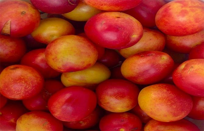 plum fruit of uttarakhand